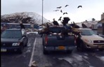 WAtch - 40 Bald Eagles Swarm Pickup Truck in Alaska