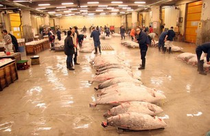 Tokyo\'s Tsukuji Fish Market Photo 0011
