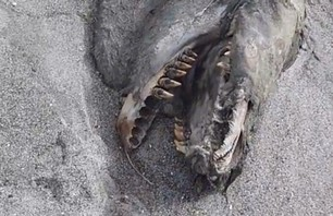 Mutant Sea Creature Identified as Killer Whale