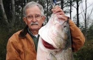 Angler Catches World Record Striped Bass in Alabama