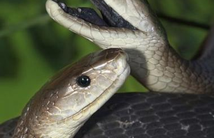 13 Most Poisonous Snakes Photo 0001