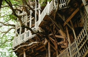 The Minister's Treehouse Photo 0005