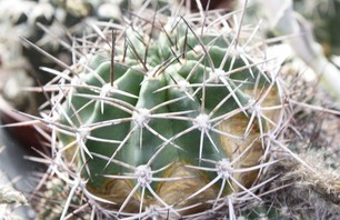 The City Cactus Photo 0003