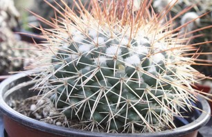 The City Cactus Photo 0004