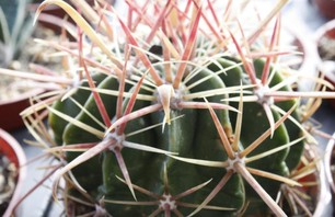 The City Cactus Photo 0005