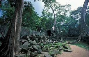 Abandoned Ta Prohm Temple in Middle of Jungle Photo 0008