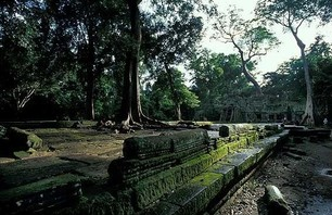 Abandoned Ta Prohm Temple in Middle of Jungle Photo 0014
