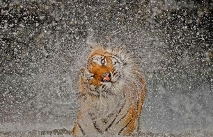National Geographic\'s 2012 Nature Photo Contest Winners
