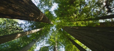 Video of the Day:Redwoods National Forest